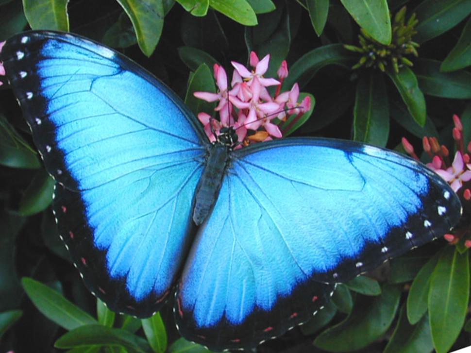Estas son las 15 mariposas más hermosas del mundo. – La Voz del ...