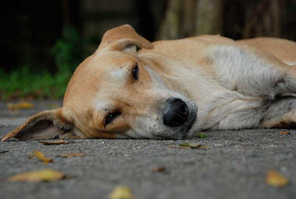 Despedirse De Una Mascota Es Tan Doloroso Como De Un Ser