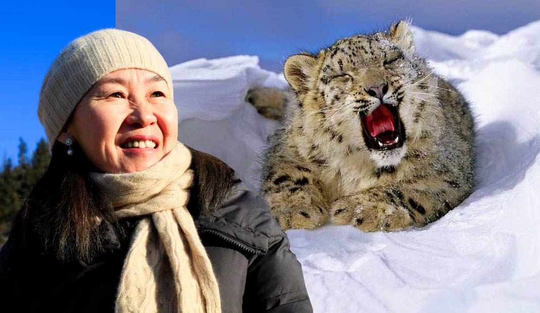 Resultado de imagen para Maestra Retirada de Mongolia Salva a Leopardos de las Nieves